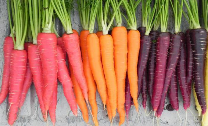 Сушеная ботва моркови полезные свойства
